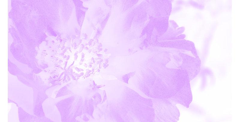 Soft Florals 12 - Light Violet (Print)