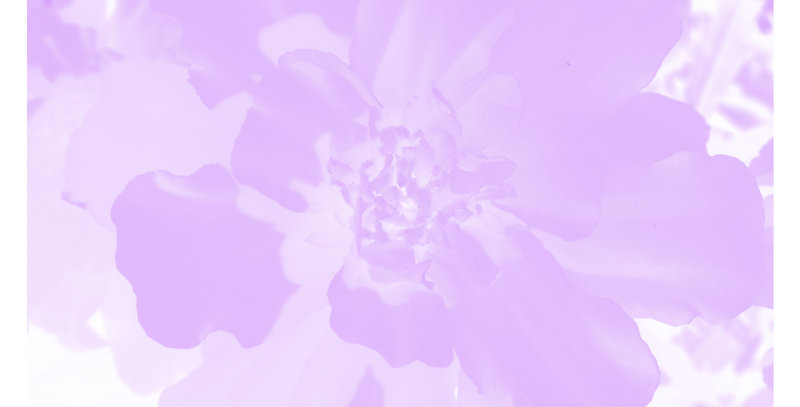 Soft Florals 4 - Light Violet (Metal)
