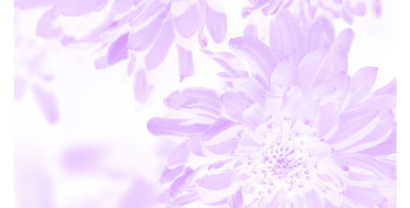 Soft Florals 7 - Light Violet (Print)