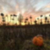 pumpkin sunset.jpg