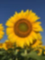 sun 4 small.jpg