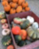 Dec Pumpkins bin.jpg
