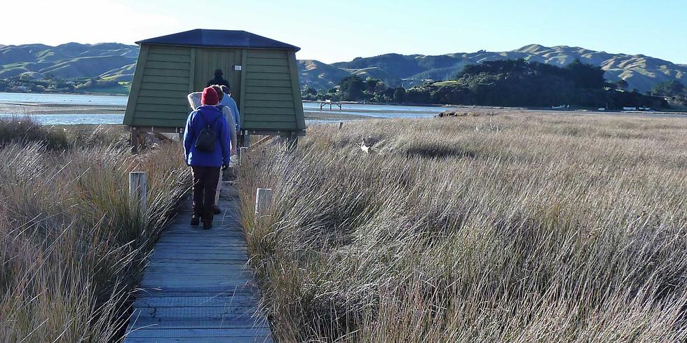 Pauatahanui Inlet Walk