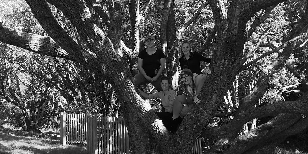 Tree climbing, bush walking and games