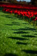10-08-2018 War Poppies-16.jpg