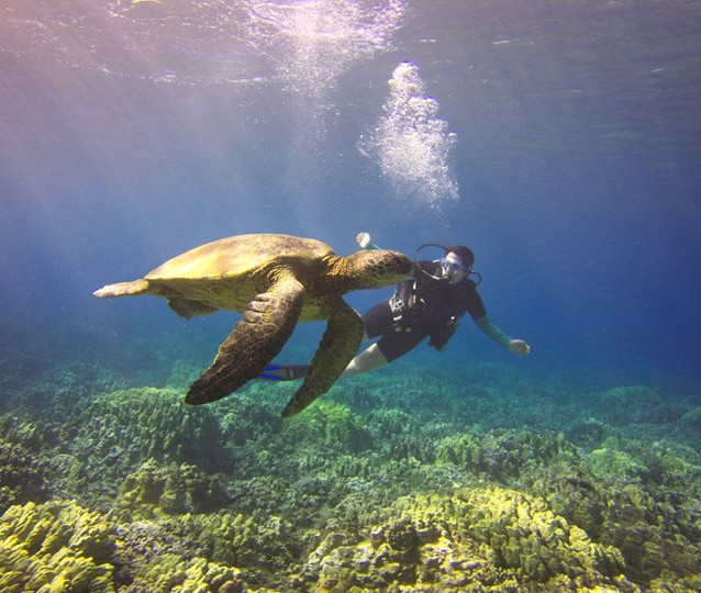 O and Turtle