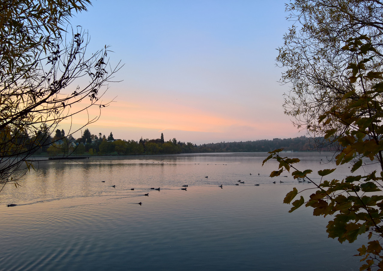 Greenlake ducks and sunrise