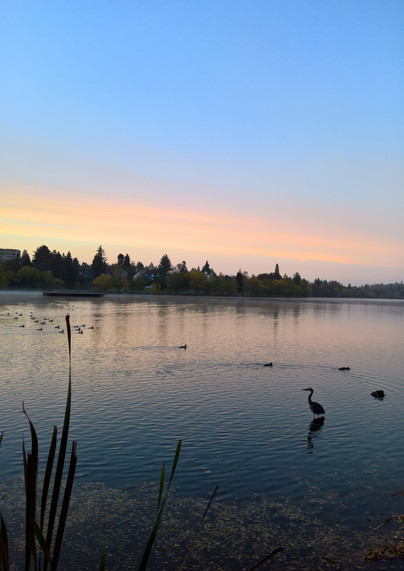 Greenlake morning walk Heron