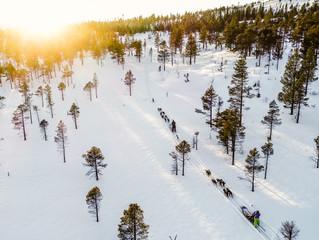 Yrende vinterliv i Meråker med hundene!
