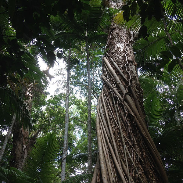 Rainforest Tree_Jane Toner.jpeg