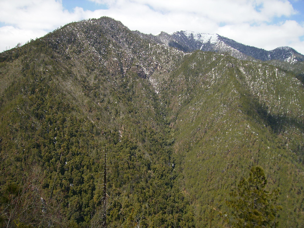 Samage Forest (Baimaxueshan Nature Reserve)