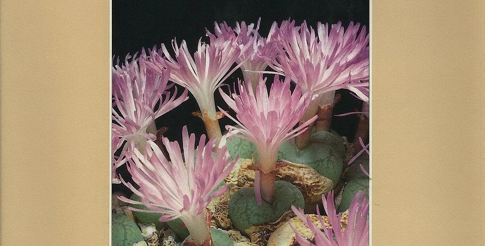 The genus Conophytum, a conograph