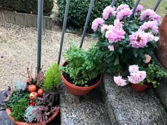 Bursins - fleurs de Claudia