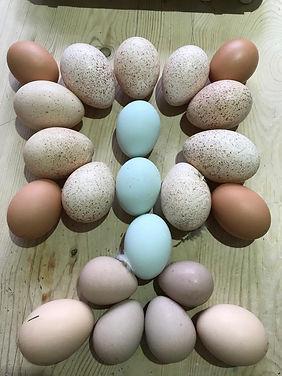 Arthur eggs.JPG