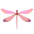 Blue%20Dragonfly_edited.png