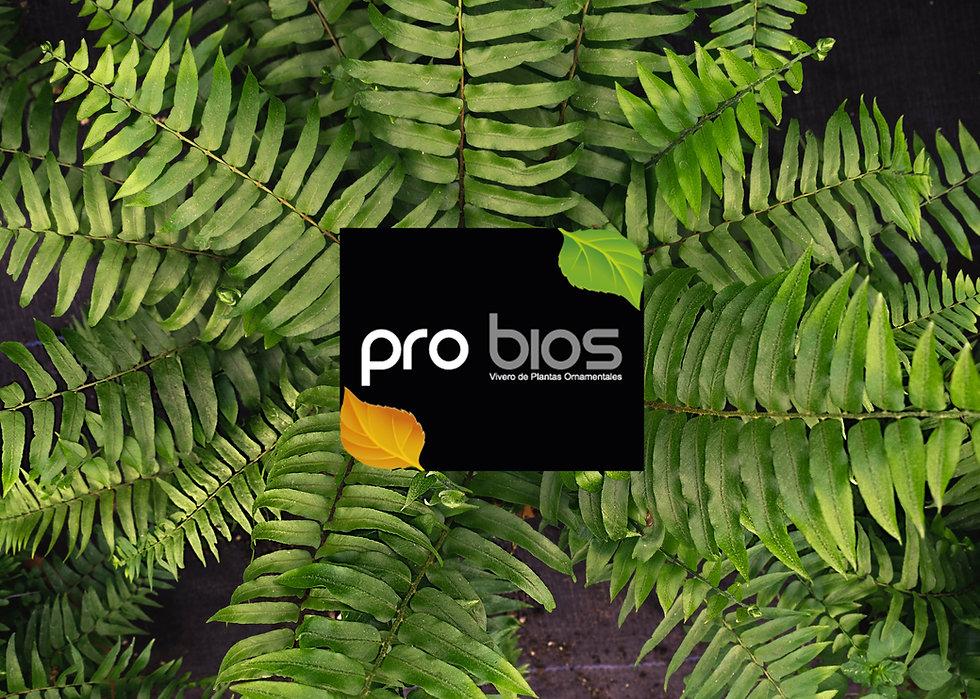 Pro-Bios Portada.jpg