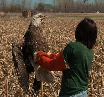 Heather with Eagle.jpg