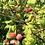 Thumbnail: Rasperry Rhubarb Jam