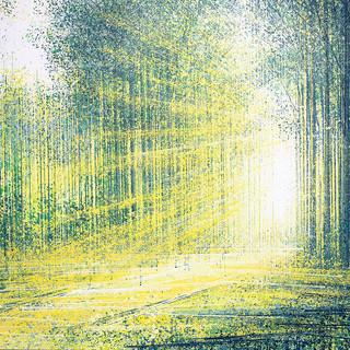 Light Through Summer Trees