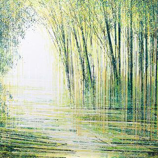 Light Through Spring Trees