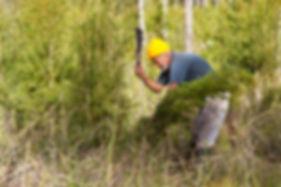 オーストラリア産野生ティーツリーオイル