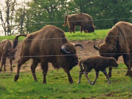 Hammerhof mit Jubiläumsbaby und neuem Bullen im Glück