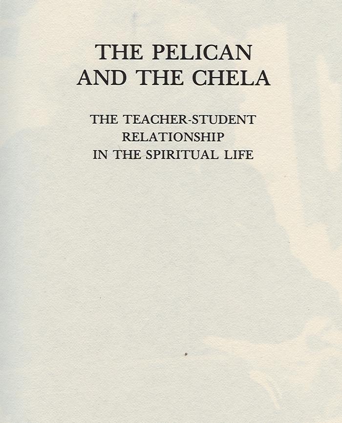 pelican02.jpg