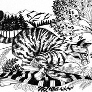 Wildcat runs silently