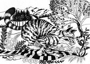 Running Wildcat