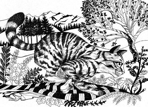Running Wildcat Print