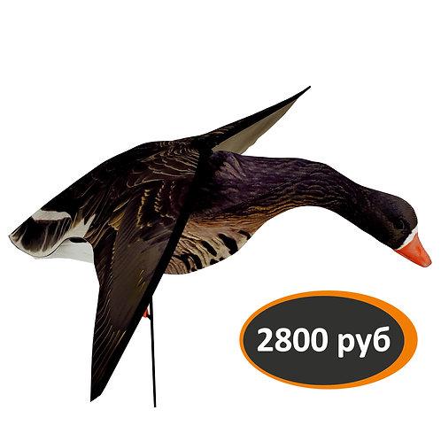Чучело белолобого гуся со складнымикрыльями