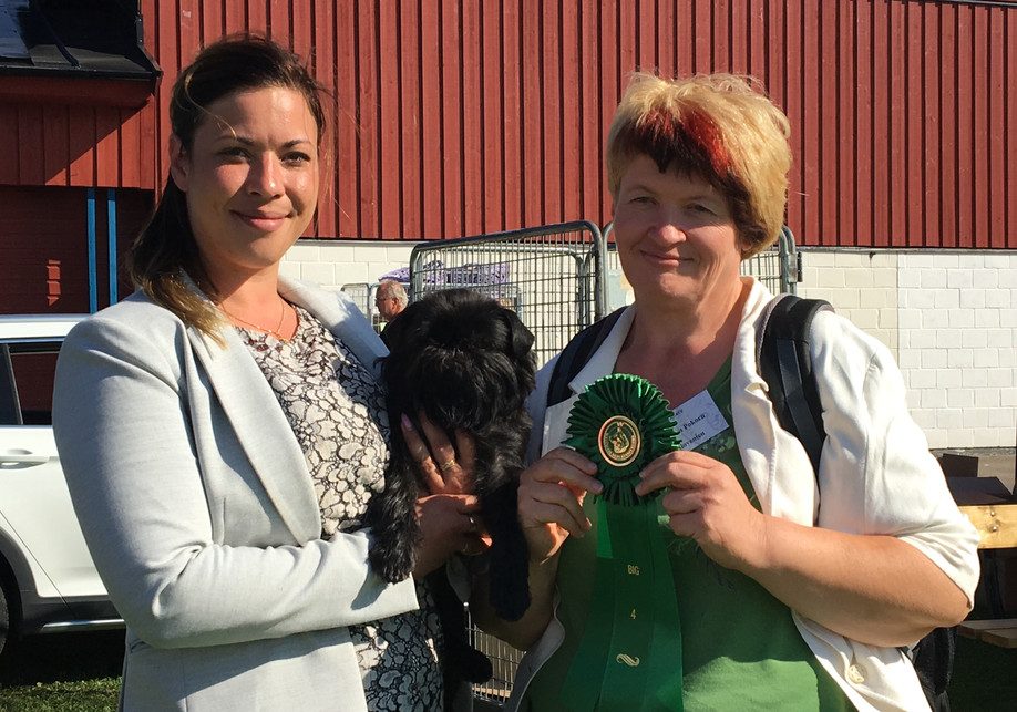 BIG 4 at SKK Köping INT Dogshow!