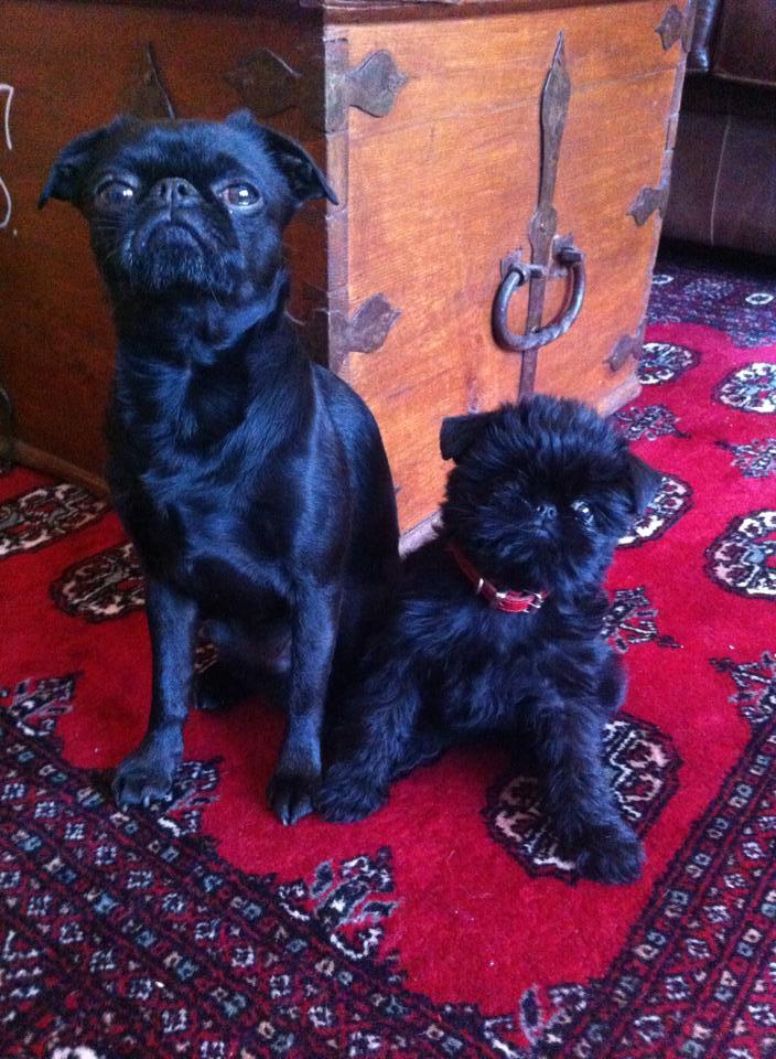 Lillebror med sin nya lillasyster
