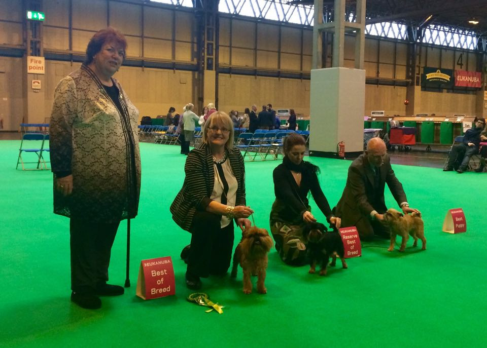 Crufts 2016 BOB Griffon Marquant The Heart Throb