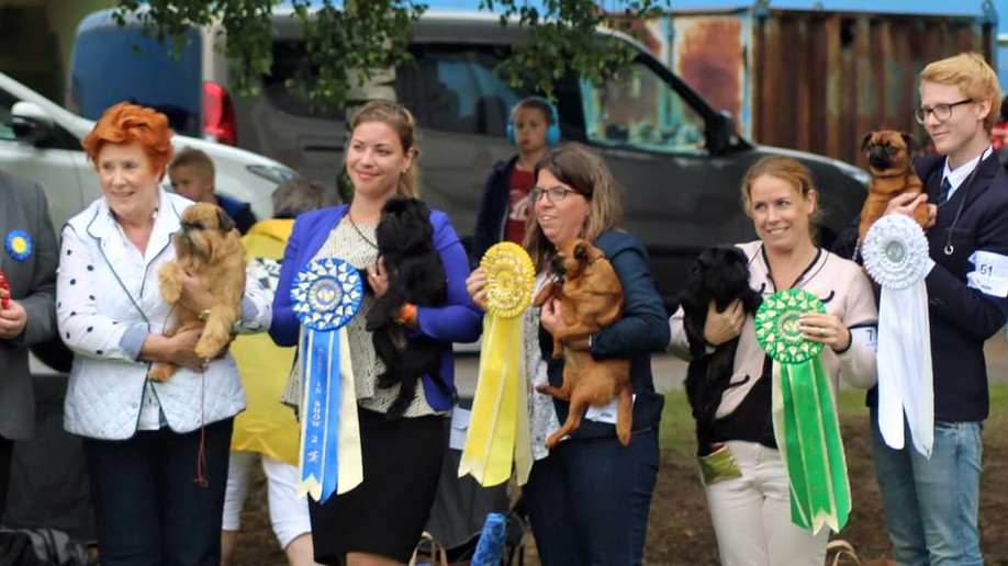 Winner at the Swedish Griffon Club Show 2016!