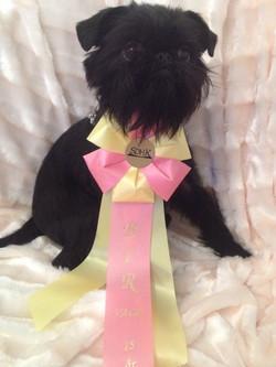 Miss C - BOB puppy  judge Tony Moran