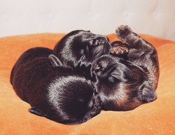 Skrållan & Mogge pups