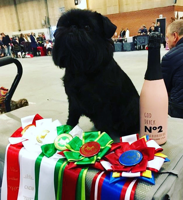 Danish KC 2 days INT with Danish Winner 2017 title Show in Herning
