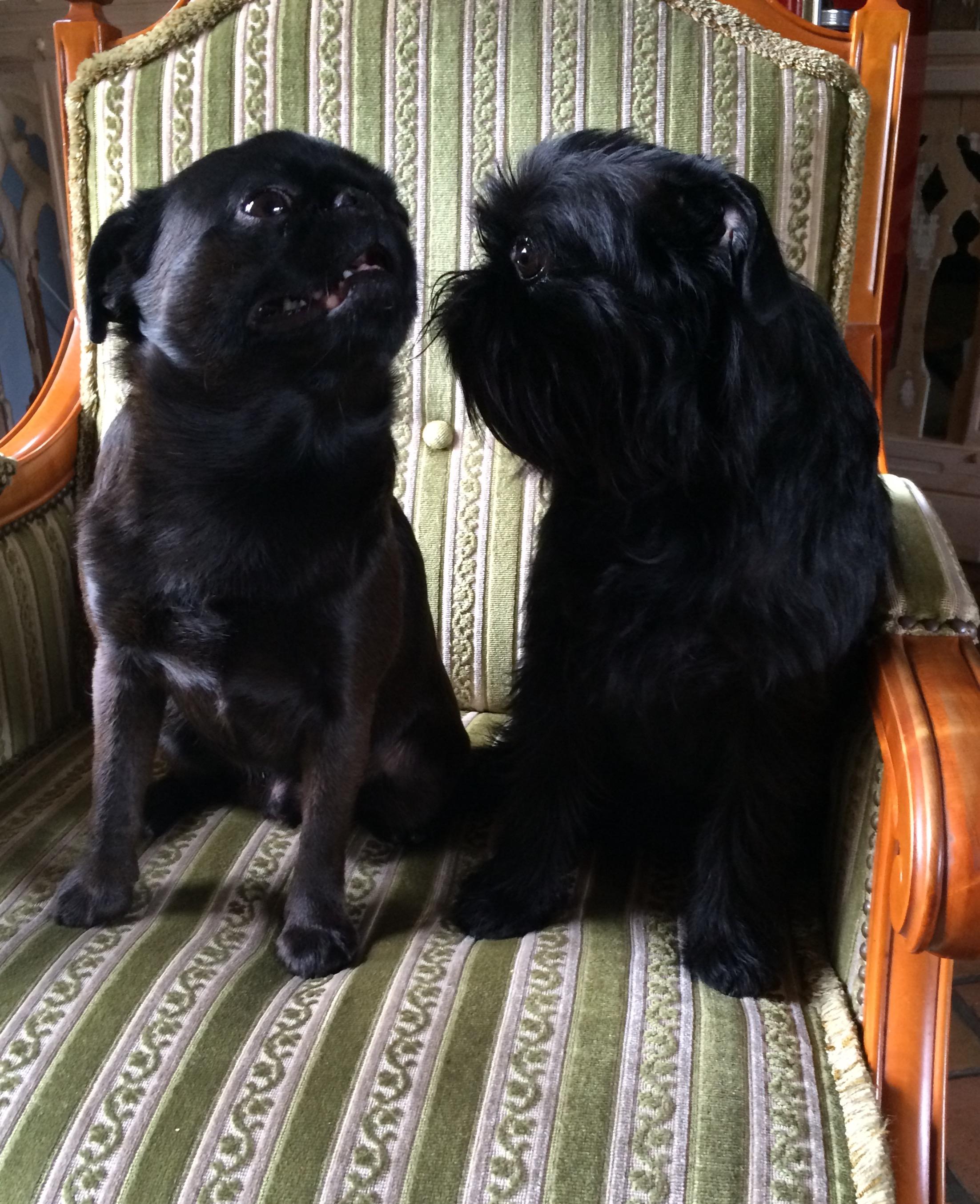 Mini & Eddie