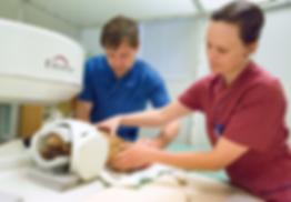 MRI Griffon FOTO: LEIF HALLBERG OCH DJURDOKTORN