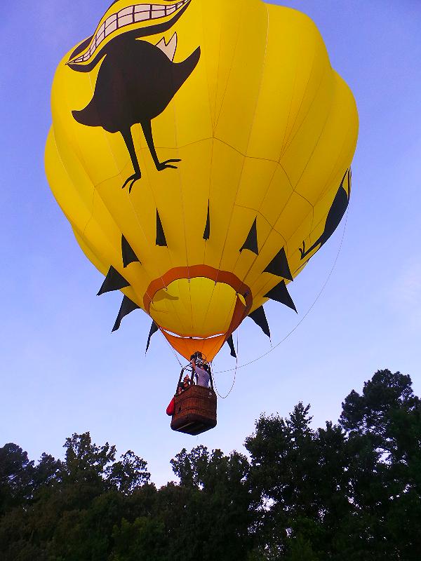 Black Bird lift off 2014