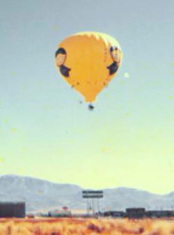 Black Bird in flight 1977