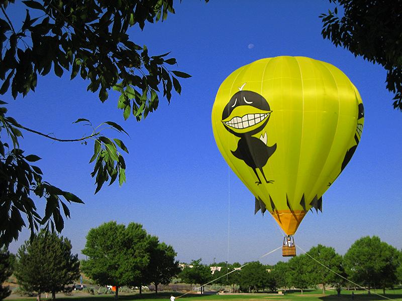 Black Bird 2009