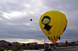 Black Bird at Balloon Fiesta