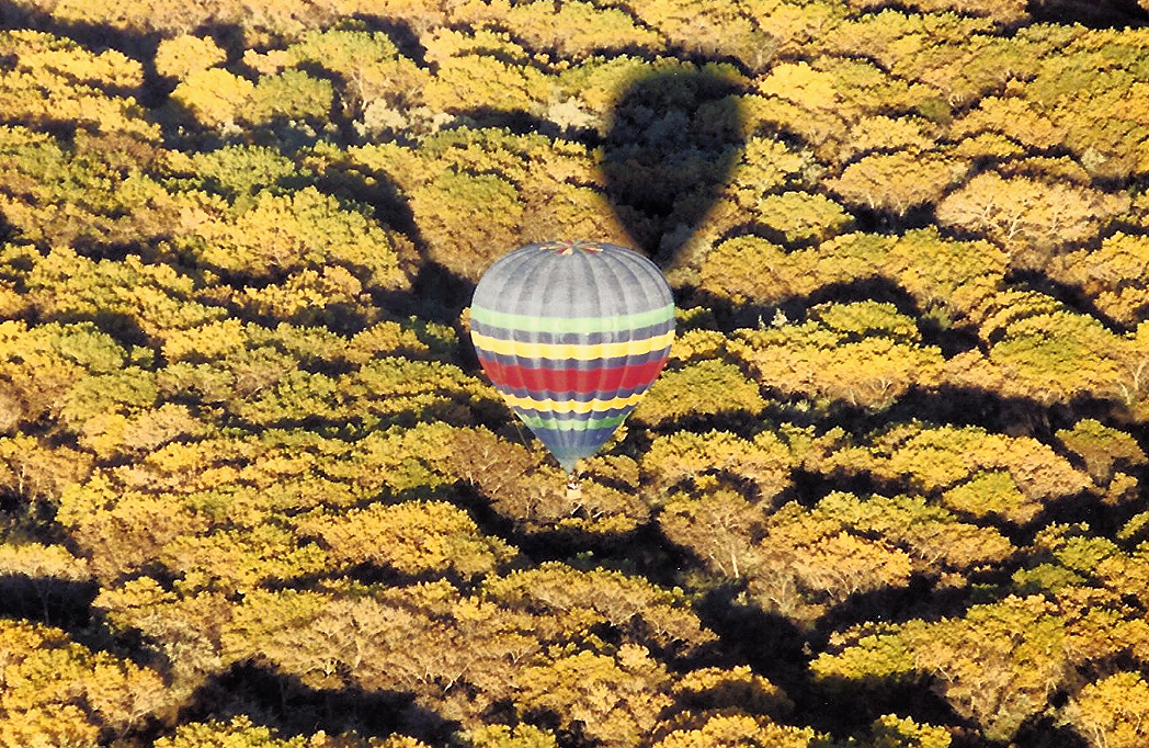 Balloon With Changing Leaves