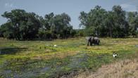 Male elephant refreshing in Luangwa Park, Zambia, Africa