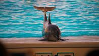 Dolphins show at Okinawa Expo Park, Japan