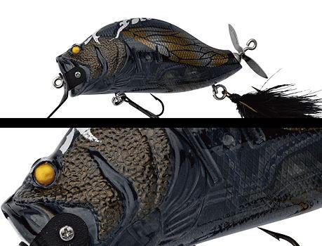 102_black_cicada.jpg