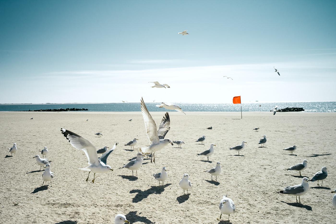 Coney Island - L1000297