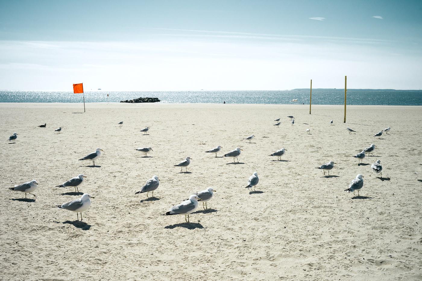 Coney Island - L1000300